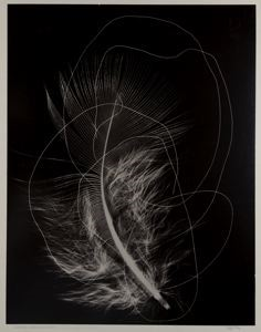 Image of Linear Arrangement (Feather Photogram, #1)