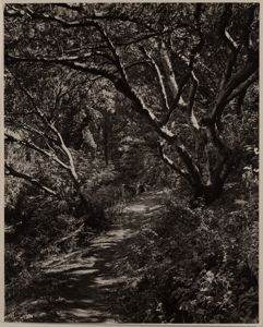 Image of Woods Trail