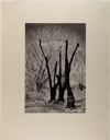Image of Burnt Trees, Owens Valley [Alternate title: Trees and Mountain]