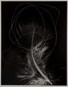 Image of Feather Photogram #2